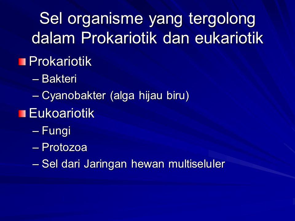 Sel organisme yang tergolong dalam Prokariotik dan eukariotik Prokariotik –Bakteri –Cyanobakter (alga hijau biru) Eukoariotik –Fungi –Protozoa –Sel da
