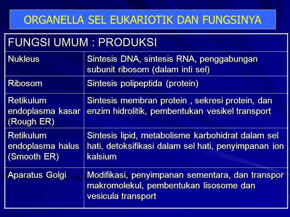 FUNGSI UMUM : PRODUKSI Nukleus Sintesis DNA, sintesis RNA, penggabungan subunit ribosom (dalam inti sel) Ribosom Sintesis polipeptida (protein) Retikulum endoplasma kasar (Rough ER) Sintesis membran protein, sekresi protein, dan enzim hidrolitik, pembentukan vesikel transport Retikulum endoplasma halus (Smooth ER) Sintesis lipid, metabolisme karbohidrat dalam sel hati, detoksifikasi dalam sel hati, penyimpanan ion kalsium Aparatus Golgi Modifikasi, penyimpanan sementara, dan transpor makromolekul, pembentukan lisosome dan vesicula transport ORGANELLA SEL EUKARIOTIK DAN FUNGSINYA