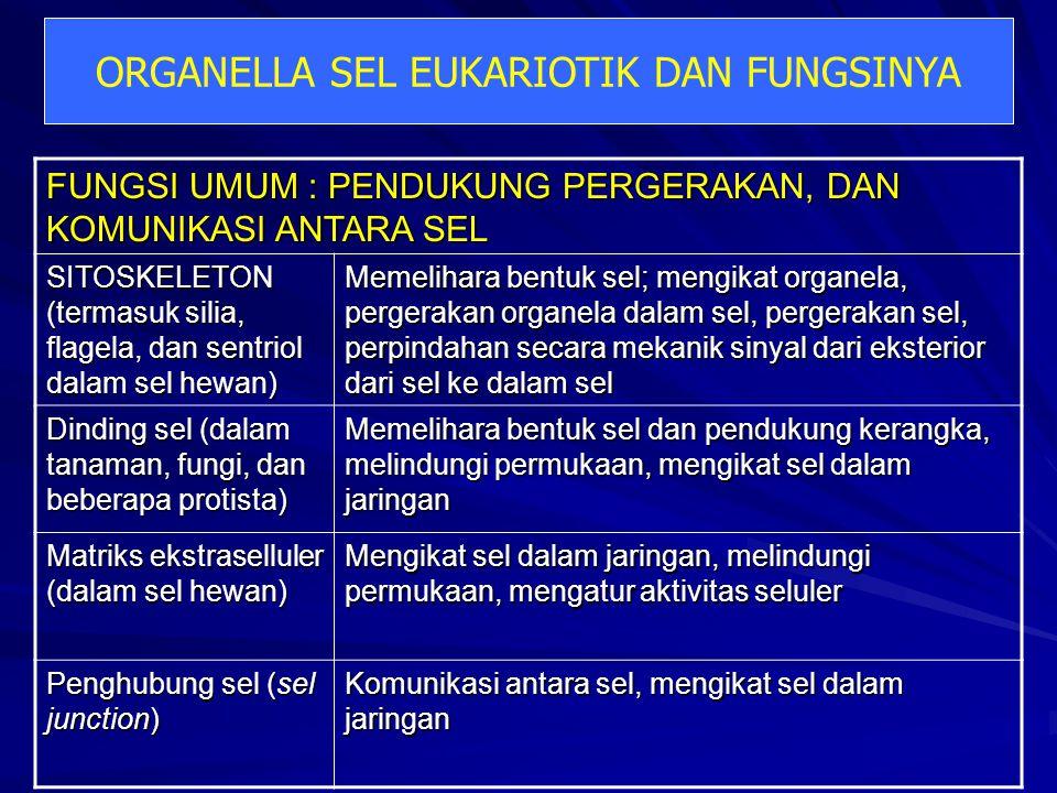 ORGANELLA SEL EUKARIOTIK DAN FUNGSINYA FUNGSI UMUM : PENDUKUNG PERGERAKAN, DAN KOMUNIKASI ANTARA SEL SITOSKELETON (termasuk silia, flagela, dan sentri
