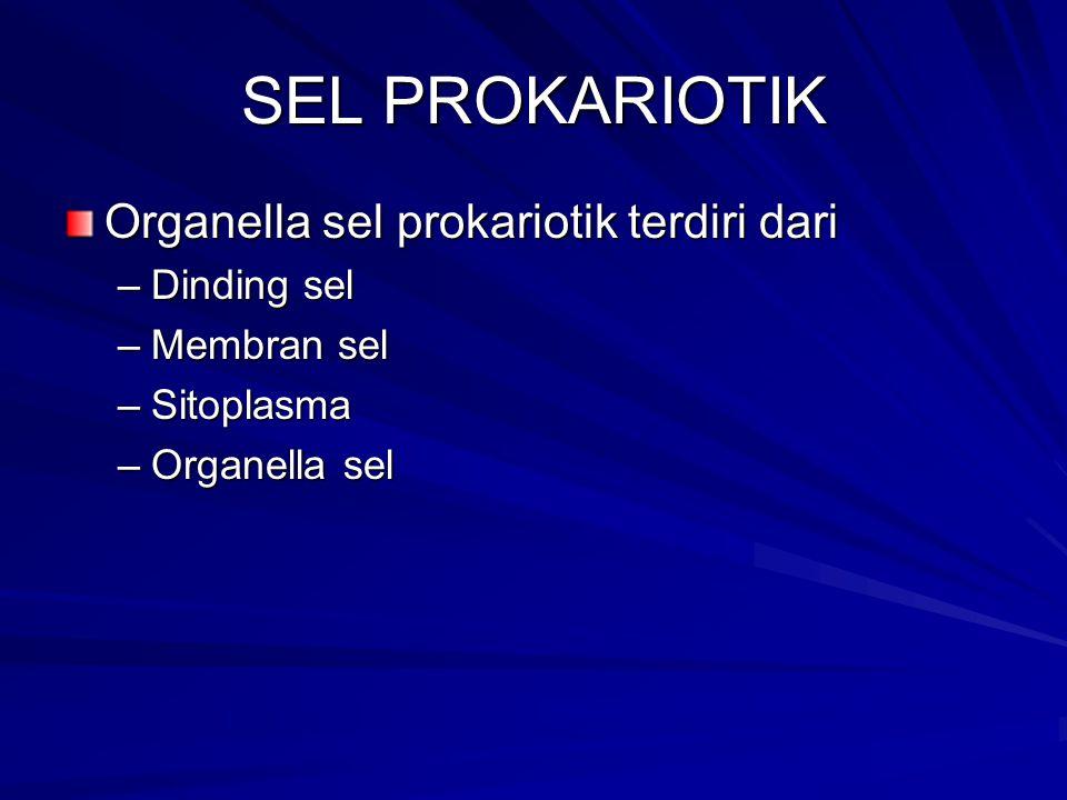 SEL PROKARIOTIK Organella sel prokariotik terdiri dari –Dinding sel –Membran sel –Sitoplasma –Organella sel