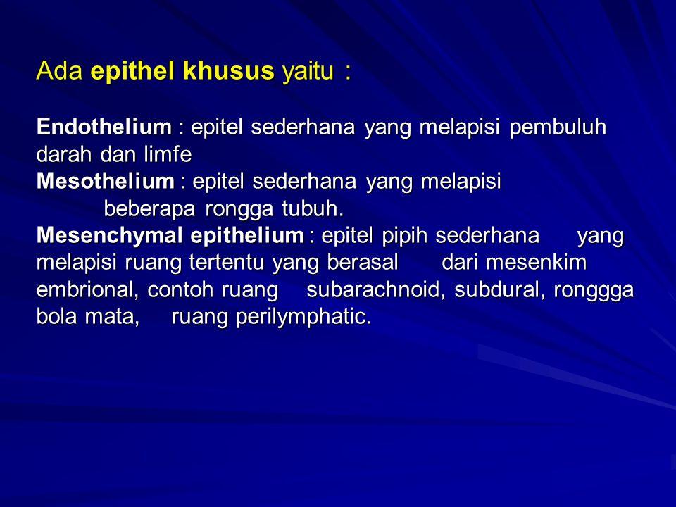 Ada epithel khusus yaitu : Endothelium : epitel sederhana yang melapisi pembuluh darah dan limfe Mesothelium : epitel sederhana yang melapisi beberapa rongga tubuh.