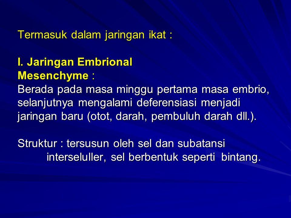 Termasuk dalam jaringan ikat : I. Jaringan Embrional Mesenchyme : Berada pada masa minggu pertama masa embrio, selanjutnya mengalami deferensiasi menj