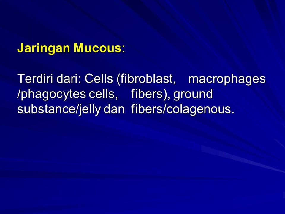 Jaringan Mucous: Terdiri dari: Cells (fibroblast, macrophages /phagocytes cells, fibers), ground substance/jelly dan fibers/colagenous.