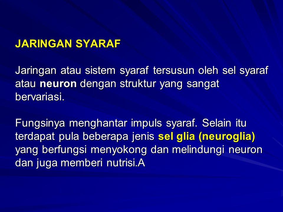 JARINGAN SYARAF Jaringan atau sistem syaraf tersusun oleh sel syaraf atau neuron dengan struktur yang sangat bervariasi. Fungsinya menghantar impuls s