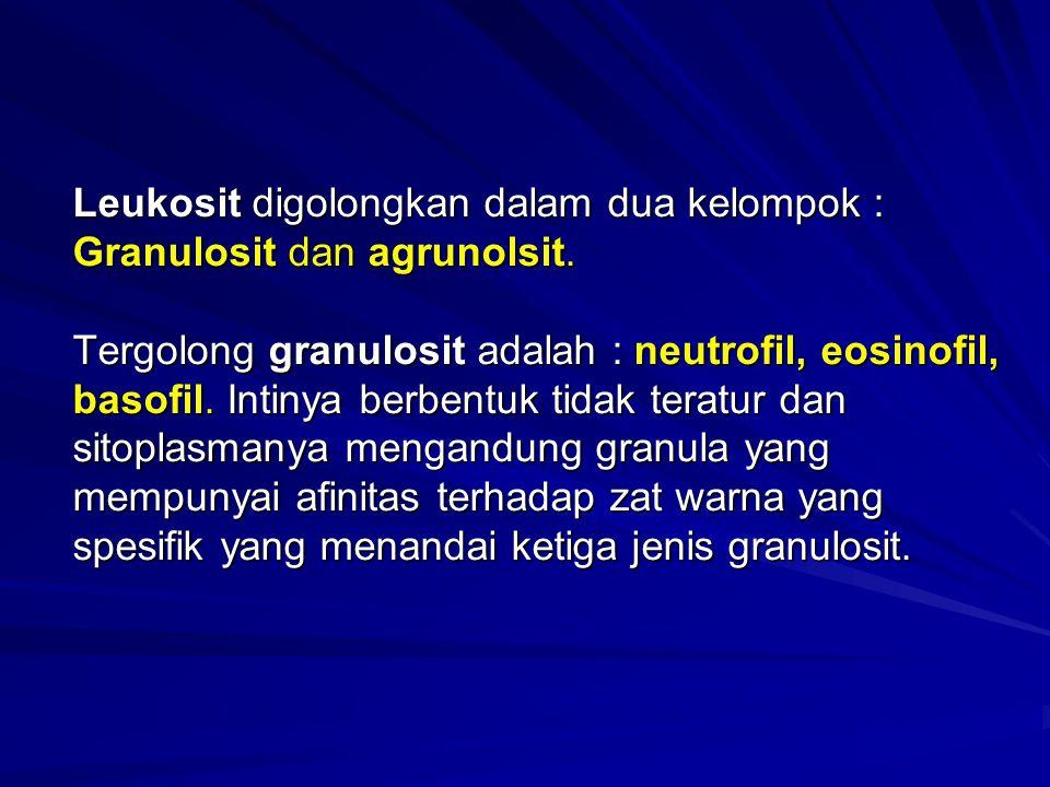 Leukosit digolongkan dalam dua kelompok : Granulosit dan agrunolsit. Tergolong granulosit adalah : neutrofil, eosinofil, basofil. Intinya berbentuk ti