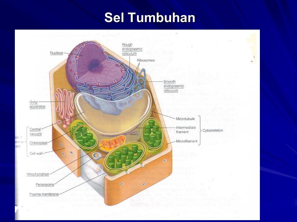 Inti (nukleus ) dan retikulum endoplasma kasar