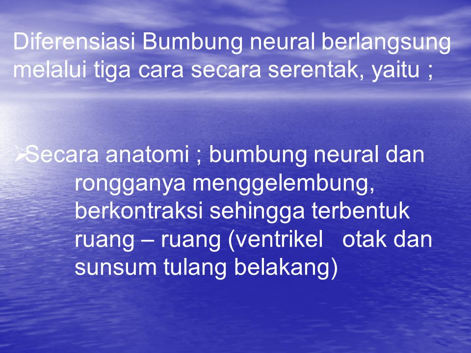Diferensiasi Bumbung neural berlangsung melalui tiga cara secara serentak, yaitu ;  Secara anatomi ; bumbung neural dan rongganya menggelembung, berkontraksi sehingga terbentuk ruang – ruang (ventrikel otak dan sunsum tulang belakang)