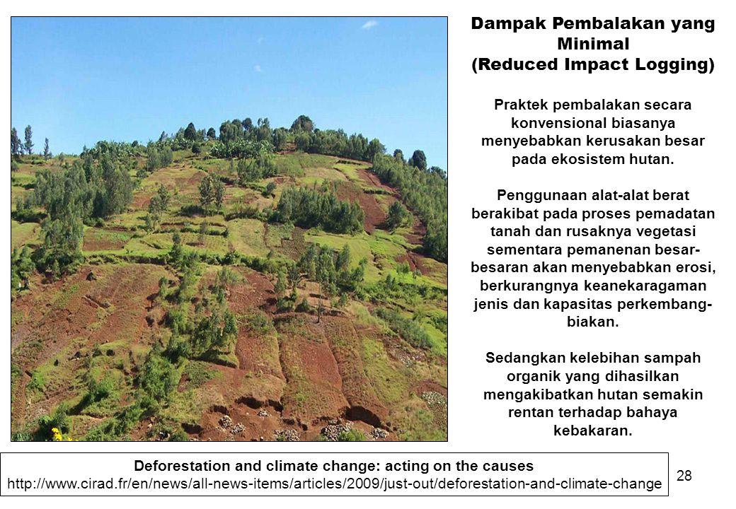 28 Dampak Pembalakan yang Minimal (Reduced Impact Logging) Praktek pembalakan secara konvensional biasanya menyebabkan kerusakan besar pada ekosistem