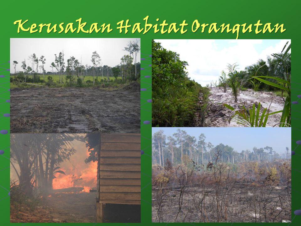 Kerusakan Habitat Orangutan 5