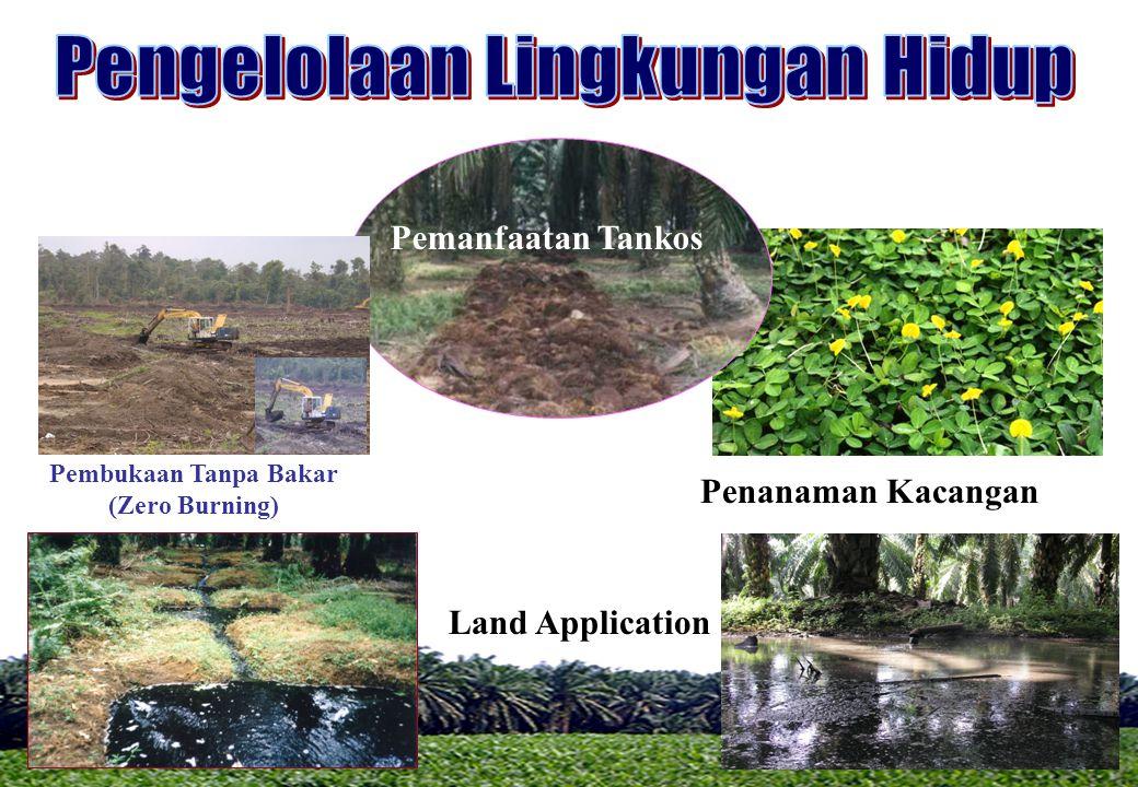 Land Application Pembukaan Tanpa Bakar (Zero Burning) Penanaman Kacangan Pemanfaatan Tankos