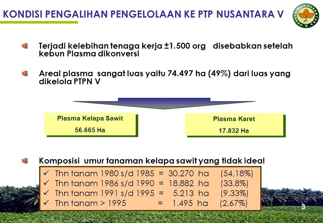 Terjadi kelebihan tenaga kerja ±1.500 org disebabkan setelah kebun Plasma dikonversi Areal plasma sangat luas yaitu 74.497 ha (49%) dari luas yang dikelola PTPN V Komposisi umur tanaman kelapa sawit yang tidak ideal KONDISI PENGALIHAN PENGELOLAAN KE PTP NUSANTARA V Thn tanam 1980 s/d 1985 = 30.270 ha (54,18%) Thn tanam 1986 s/d 1990 = 18.882 ha (33,8%) Thn tanam 1991 s/d 1995 = 5.213 ha (9.33%) Thn tanam > 1995 = 1.495 ha (2,67%) Plasma Kelapa Sawit 56.665 Ha Plasma Kelapa Sawit 56.665 Ha Plasma Karet 17.832 Ha Plasma Karet 17.832 Ha 3