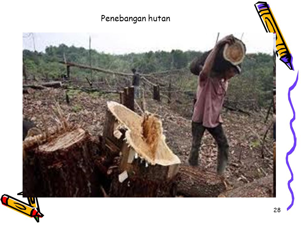 28 Penebangan hutan