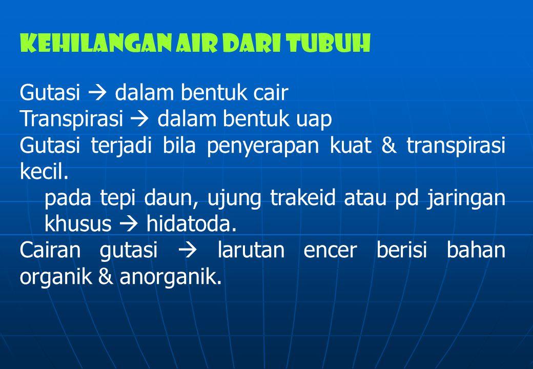 KEHILANGAN AIR DARI TUBUH Gutasi  dalam bentuk cair Transpirasi  dalam bentuk uap Gutasi terjadi bila penyerapan kuat & transpirasi kecil. pada tepi
