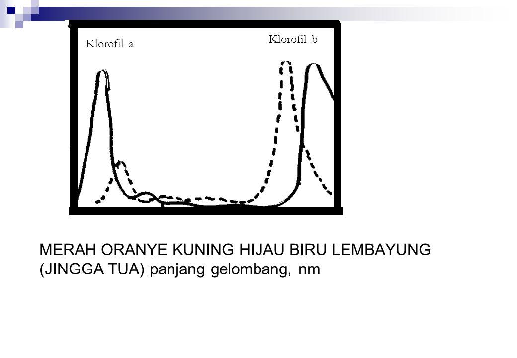 MERAH ORANYE KUNING HIJAU BIRU LEMBAYUNG (JINGGA TUA) panjang gelombang, nm Klorofil a Klorofil b