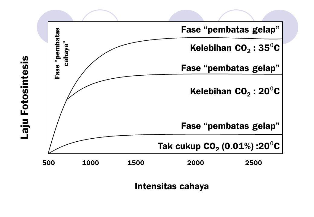 """Fase """"pembatas gelap"""" Kelebihan CO 2 : 35 ⁰ C Fase """"pembatas gelap"""" Kelebihan CO 2 : 20 ⁰ C Fase """"pembatas gelap"""" Tak cukup CO 2 (0.01%) :20 ⁰ C Fase"""