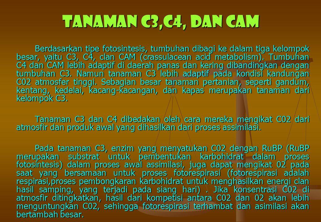 Tanaman C3,C4, dan CAM Berdasarkan tipe fotosintesis, tumbuhan dibagi ke dalam tiga kelompok besar, yaitu C3, C4, clan CAM (crassulacean acid metaboli