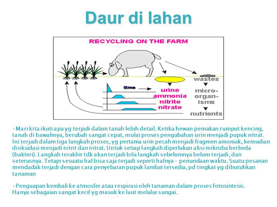 Daur di lahan Mari kita ikuti apa yg terjadi dalam tanah lebih detail. Ketika hewan pemakan rumput kencing, tanah di bawahnya, berubah sangat cepat, m