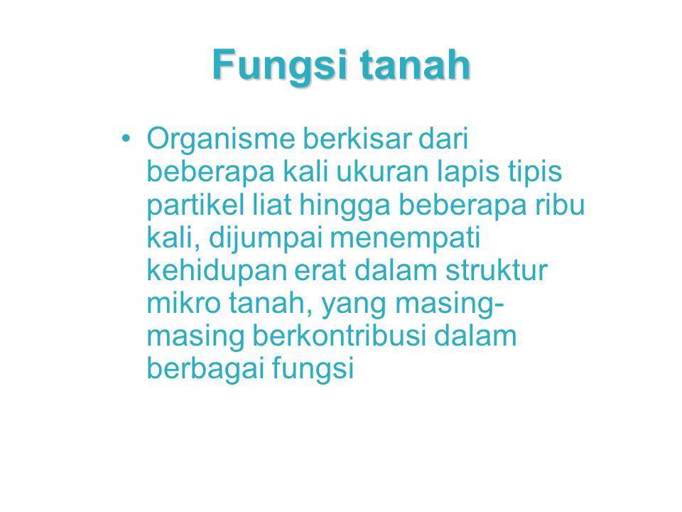 Fungsi tanah Organisme berkisar dari beberapa kali ukuran lapis tipis partikel liat hingga beberapa ribu kali, dijumpai menempati kehidupan erat dalam