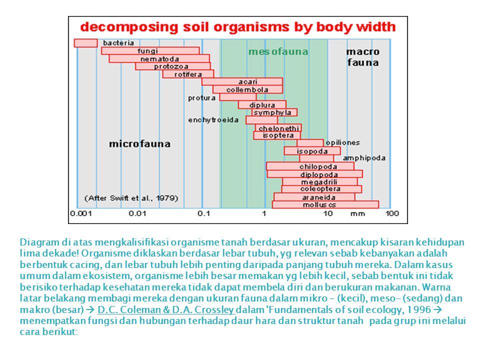 Diagram di atas mengkalisifikasi organisme tanah berdasar ukuran, mencakup kisaran kehidupan lima dekade! Organisme diklaskan berdasar lebar tubuh, yg