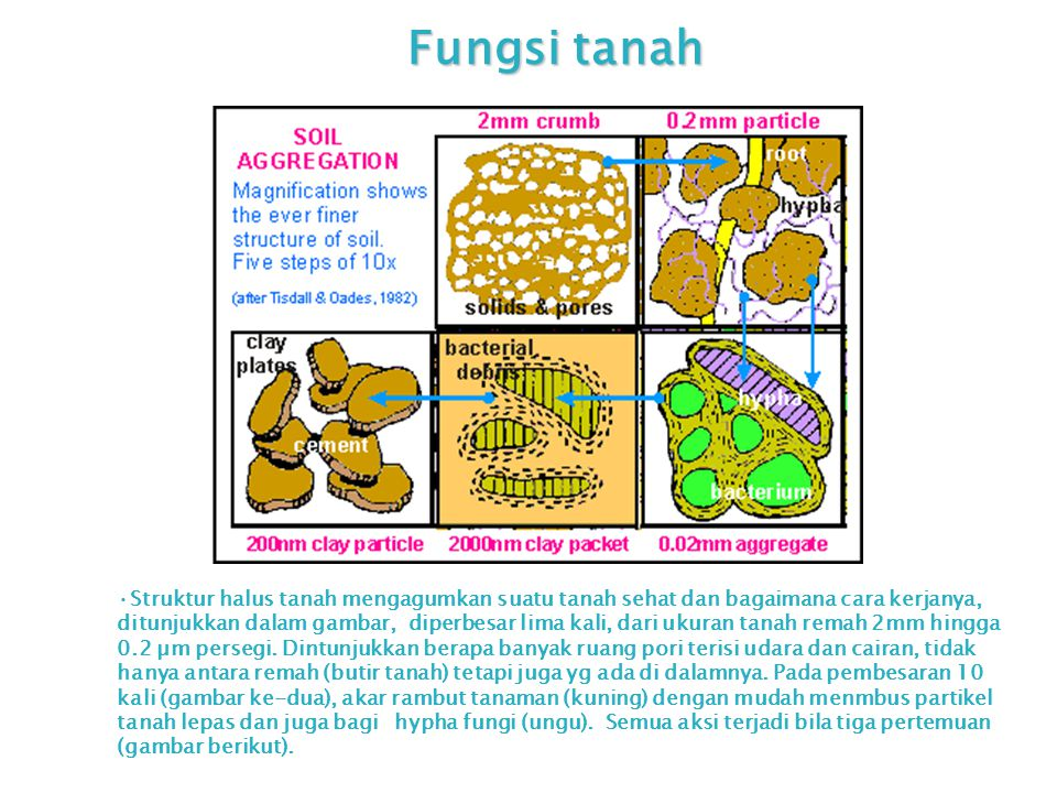 Fungsi tanah Struktur halus tanah mengagumkan suatu tanah sehat dan bagaimana cara kerjanya, ditunjukkan dalam gambar, diperbesar lima kali, dari ukur