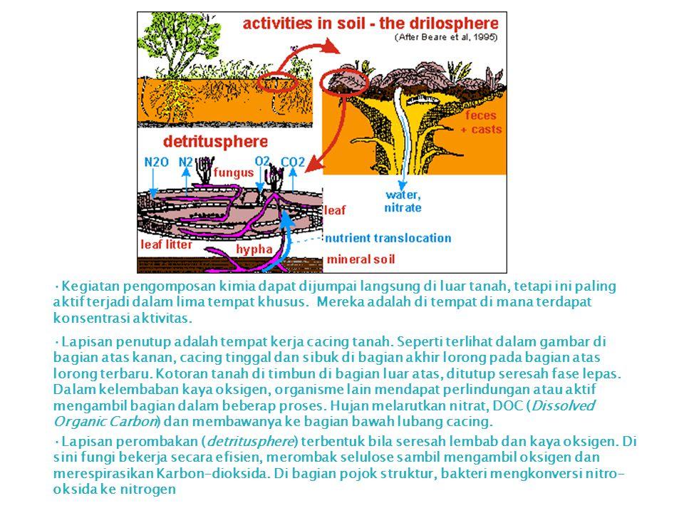 Kegiatan pengomposan kimia dapat dijumpai langsung di luar tanah, tetapi ini paling aktif terjadi dalam lima tempat khusus. Mereka adalah di tempat di