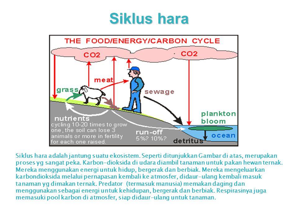Siklus hara Siklus hara adalah jantung suatu ekosistem. Seperti ditunjukkan Gambar di atas, merupakan proses yg sangat peka. Karbon-dioksida di udara