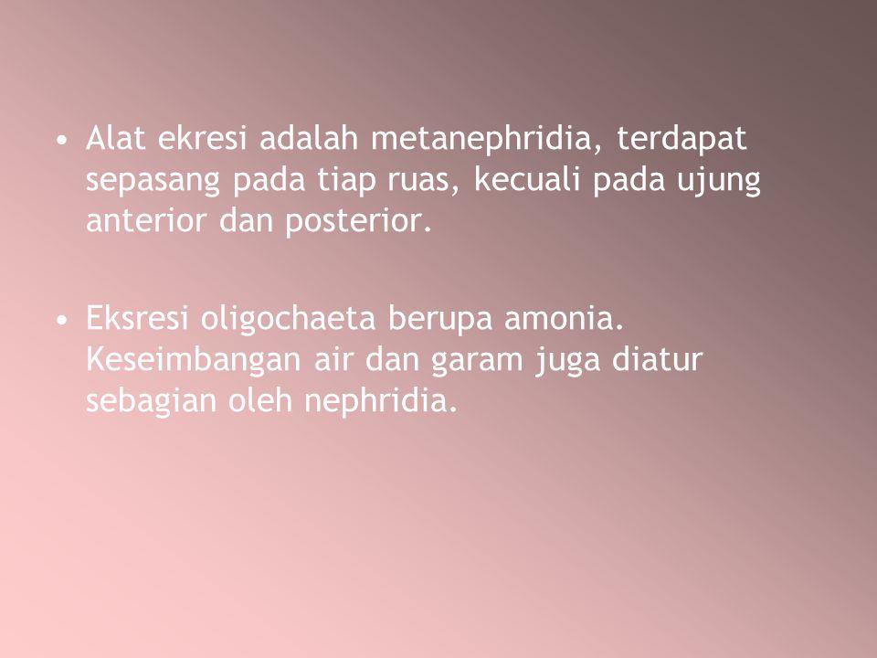 Alat ekresi adalah metanephridia, terdapat sepasang pada tiap ruas, kecuali pada ujung anterior dan posterior. Eksresi oligochaeta berupa amonia. Kese