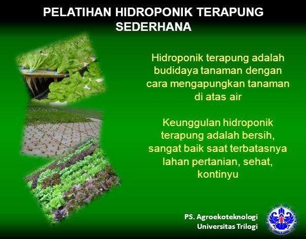 PELATIHAN HIDROPONIK TERAPUNG SEDERHANA Hidroponik terapung adalah budidaya tanaman dengan cara mengapungkan tanaman di atas air Keunggulan hidroponik terapung adalah bersih, sangat baik saat terbatasnya lahan pertanian, sehat, kontinyu PS.