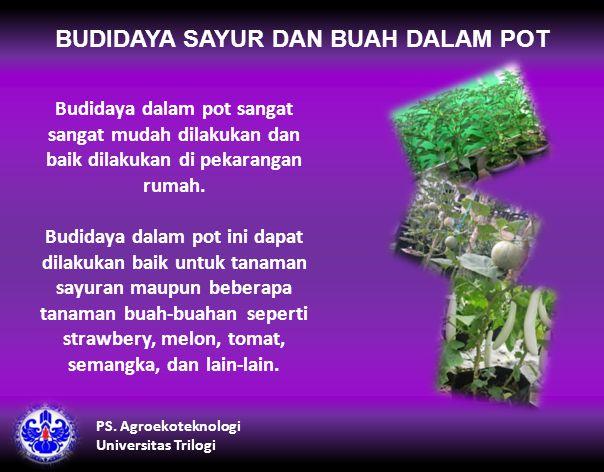 BUDIDAYA SAYUR DAN BUAH DALAM POT Budidaya dalam pot sangat sangat mudah dilakukan dan baik dilakukan di pekarangan rumah.