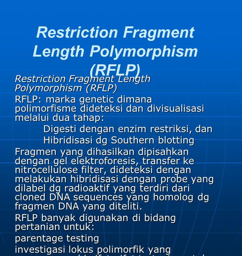 Restriction Fragment Length Polymorphism (RFLP) RFLP: marka genetic dimana polimorfisme dideteksi dan divisualisasi melalui dua tahap: Digesti dengan enzim restriksi, dan Hibridisasi dg Southern blotting Fragmen yang dihasilkan dipisahkan dengan gel elektroforesis, transfer ke nitrocellulose filter, dideteksi dengan melakukan hibridisasi dengan probe yang dilabel dg radioaktif yang terdiri dari cloned DNA sequences yang homolog dg fragmen DNA yang diteliti.