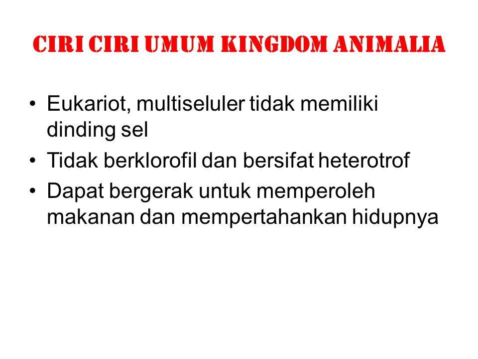 CIRI CIRI UMUM KINGDOM ANIMALia Eukariot, multiseluler tidak memiliki dinding sel Tidak berklorofil dan bersifat heterotrof Dapat bergerak untuk mempe