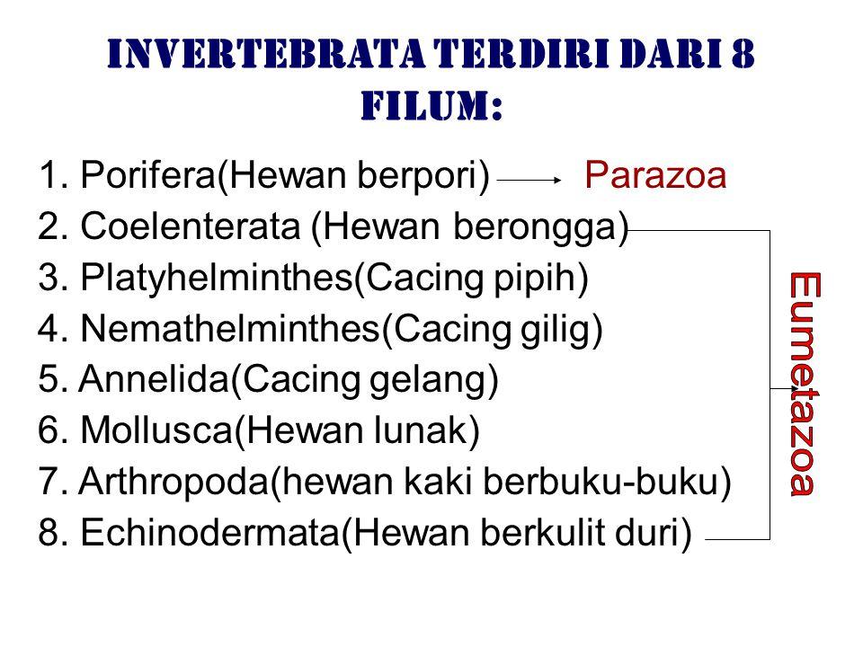 Invertebrata terdiri dari 8 filum: 1. Porifera(Hewan berpori) Parazoa 2. Coelenterata (Hewan berongga) 3. Platyhelminthes(Cacing pipih) 4. Nemathelmin
