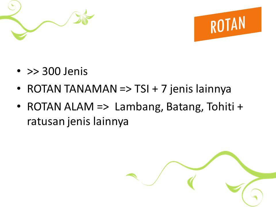 >> 300 Jenis ROTAN TANAMAN => TSI + 7 jenis lainnya ROTAN ALAM => Lambang, Batang, Tohiti + ratusan jenis lainnya