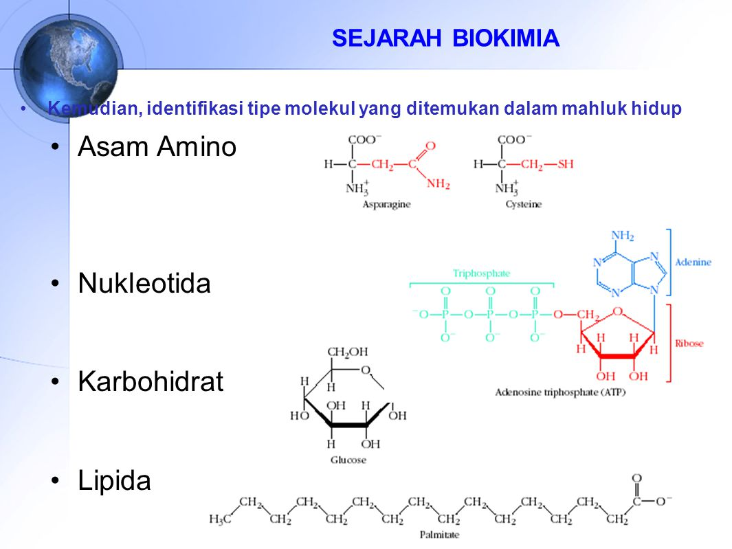 SEJARAH BIOKIMIA Kemudian, identifikasi tipe molekul yang ditemukan dalam mahluk hidup Asam Amino Nukleotida Karbohidrat Lipida