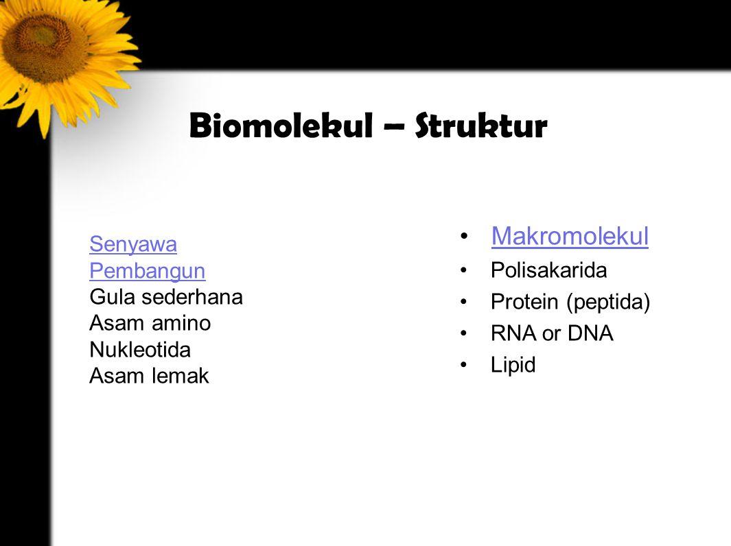 Biomolekul – Struktur Senyawa Pembangun Gula sederhana Asam amino Nukleotida Asam lemak Makromolekul Polisakarida Protein (peptida) RNA or DNA Lipid