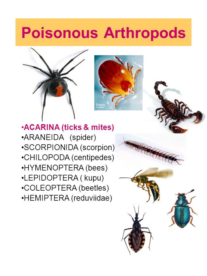 Poisonous Arthropods ACARINA (ticks & mites) ARANEIDA (spider) SCORPIONIDA (scorpion) CHILOPODA (centipedes) HYMENOPTERA (bees) LEPIDOPTERA ( kupu) CO