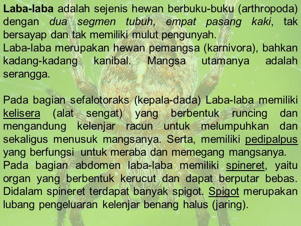 Contoh dari Araneida antara lain : labah-labah pemburu (Heteropoda Venatoria), Labah-labah kemlandingan (Nephia maculata), dan Labah- labah duri(Gastera cantha).
