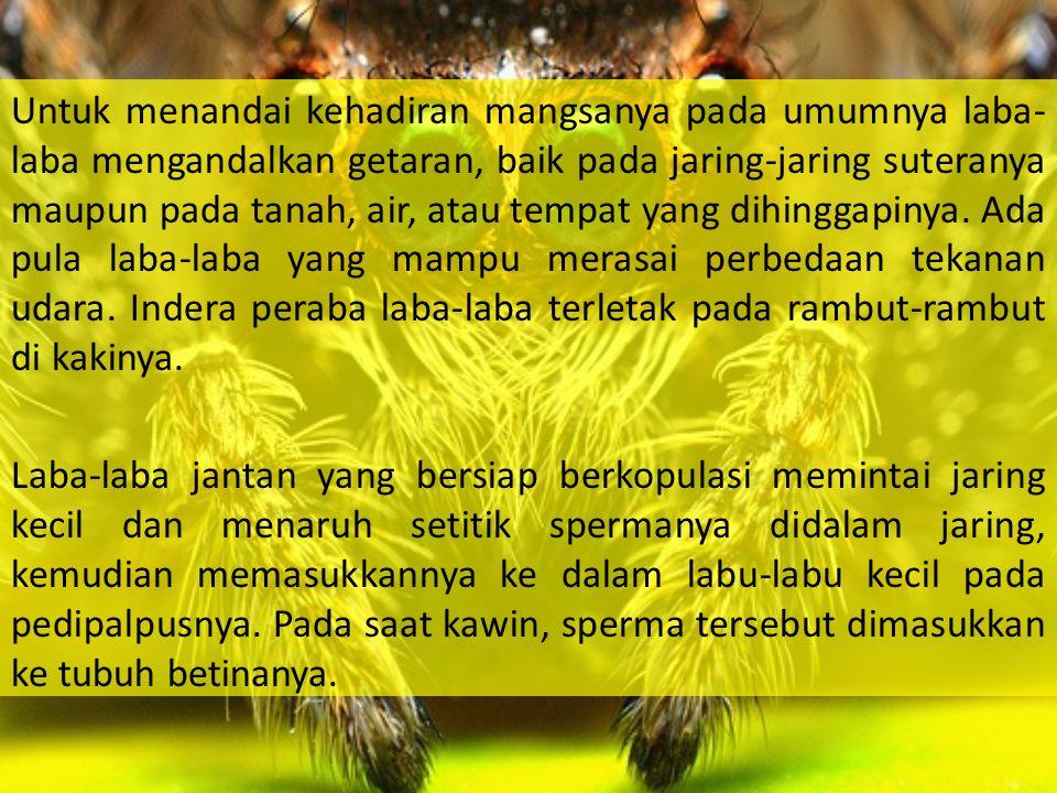 Gambar Laba-laba serta jaringnya