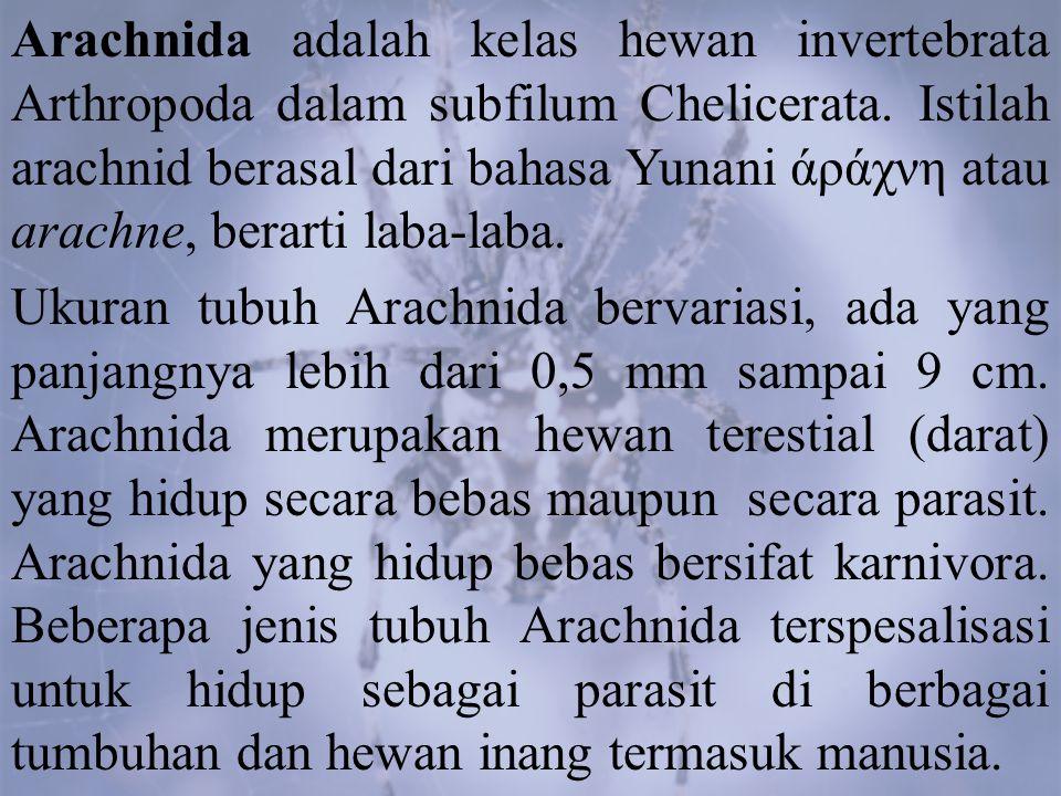 3. Acarina