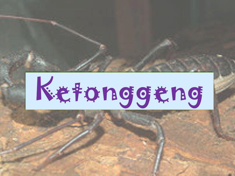 Kalajengking adalah sebuah arthropoda dengan delapan kaki, termasuk dalam ordo Scorpiones dalam kelas Arachnida.