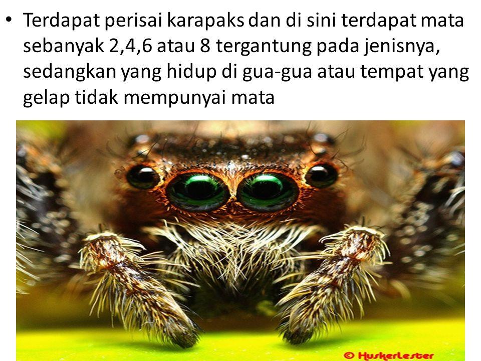 Sistem pencernaan Makanan ditangkap dengan jaring tepi dan ada pula yang diisap dari inangnya oleh Arachnida yang hidup sebagai parasit.