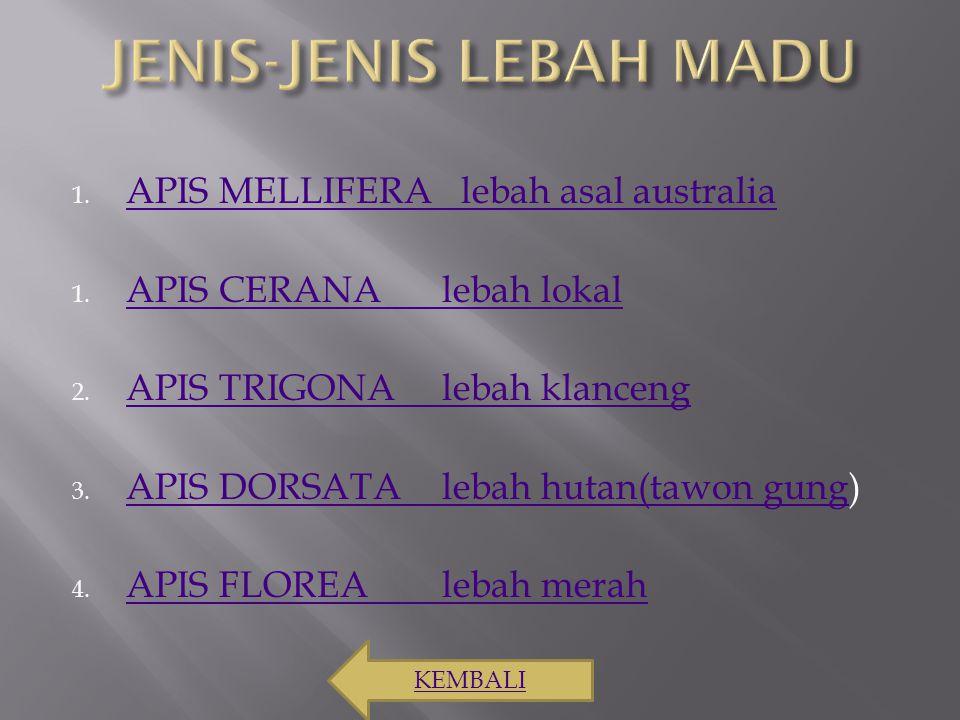 1. APIS MELLIFERA lebah asal australia APIS MELLIFERA lebah asal australia 1. APIS CERANA lebah lokal APIS CERANA lebah lokal 2. APIS TRIGONAlebah kla