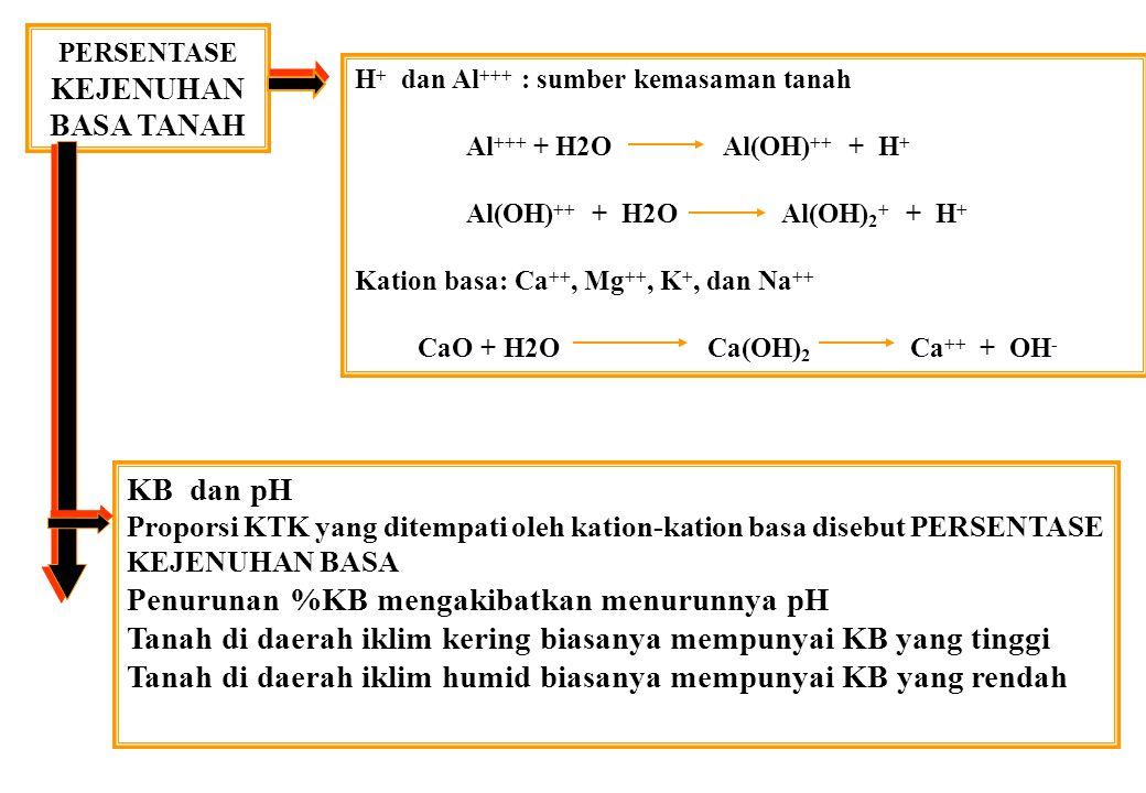 PERSENTASE KEJENUHAN BASA TANAH KB dan pH Proporsi KTK yang ditempati oleh kation-kation basa disebut PERSENTASE KEJENUHAN BASA Penurunan %KB mengakibatkan menurunnya pH Tanah di daerah iklim kering biasanya mempunyai KB yang tinggi Tanah di daerah iklim humid biasanya mempunyai KB yang rendah H + dan Al +++ : sumber kemasaman tanah Al +++ + H2O Al(OH) ++ + H + Al(OH) ++ + H2O Al(OH) 2 + + H + Kation basa: Ca ++, Mg ++, K +, dan Na ++ CaO + H2O Ca(OH) 2 Ca ++ + OH -