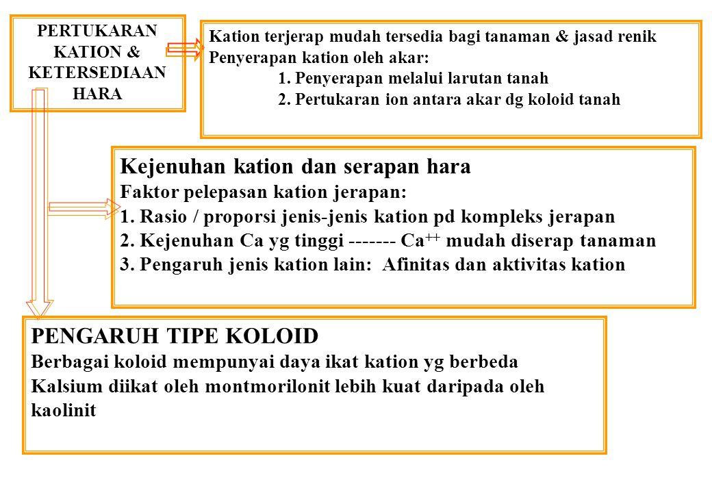 PERTUKARAN KATION & KETERSEDIAAN HARA Kejenuhan kation dan serapan hara Faktor pelepasan kation jerapan: 1.