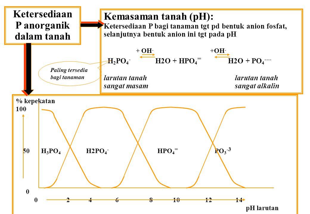 Ketersediaan P anorganik dalam tanah Kemasaman tanah (pH): Ketersediaan P bagi tanaman tgt pd bentuk anion fosfat, selanjutnya bentuk anion ini tgt pa
