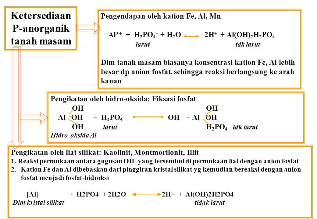 Ketersediaan P-anorganik tanah masam Pengendapan oleh kation Fe, Al, Mn Al 3+ + H 2 PO 4 - + H 2 O 2H + + Al(OH) 2 H 2 PO 4 larut tdk larut Dlm tanah masam biasanya konsentrasi kation Fe, Al lebih besar dp anion fosfat, sehingga reaksi berlangsung ke arah kanan Pengikatan oleh hidro-oksida: Fiksasi fosfat OH OH Al OH + H 2 PO 4 - OH - + Al OH larut tdk larut OH larut H 2 PO 4 tdk larut Hidro-oksida Al Pengikatan oleh liat silikat: Kaolinit, Montmorilonit, Illit 1.