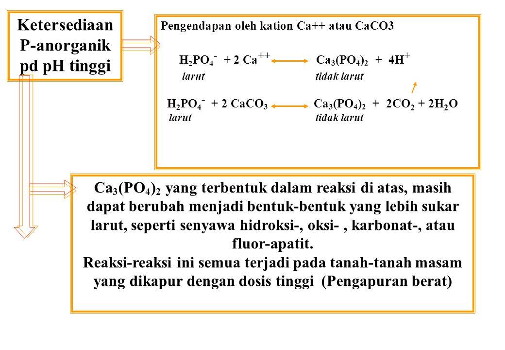 Ketersediaan P-anorganik pd pH tinggi Pengendapan oleh kation Ca++ atau CaCO3 H 2 PO 4 - + 2 Ca ++ Ca 3 (PO 4 ) 2 + 4H + larut tidak larut H 2 PO 4 - + 2 CaCO 3 Ca 3 (PO 4 ) 2 + 2CO 2 + 2H 2 O larut tidak larut Ca 3 (PO 4 ) 2 yang terbentuk dalam reaksi di atas, masih dapat berubah menjadi bentuk-bentuk yang lebih sukar larut, seperti senyawa hidroksi-, oksi-, karbonat-, atau fluor-apatit.