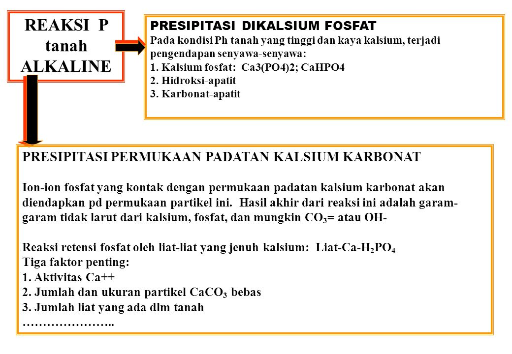 REAKSI P tanah ALKALINE PRESIPITASI DIKALSIUM FOSFAT Pada kondisi Ph tanah yang tinggi dan kaya kalsium, terjadi pengendapan senyawa-senyawa: 1.