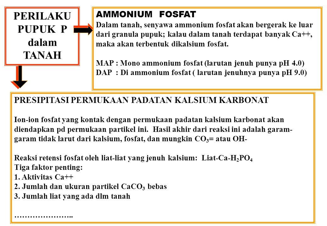 PERILAKU PUPUK P dalam TANAH AMMONIUM FOSFAT Dalam tanah, senyawa ammonium fosfat akan bergerak ke luar dari granula pupuk; kalau dalam tanah terdapat banyak Ca++, maka akan terbentuk dikalsium fosfat.