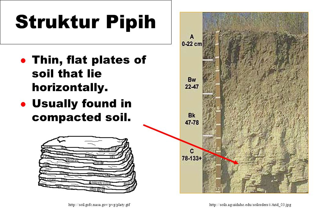Struktur Pipih l Thin, flat plates of soil that lie horizontally. l Usually found in compacted soil. http://soil.gsfc.nasa.gov/pvg/platy.gifhttp://soi